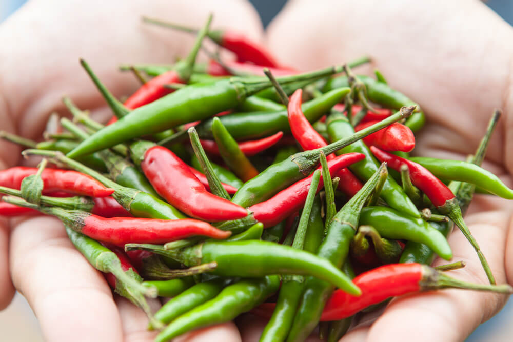Hands holding chillies