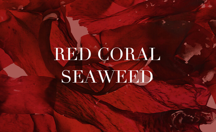 Red Coral Seaweed